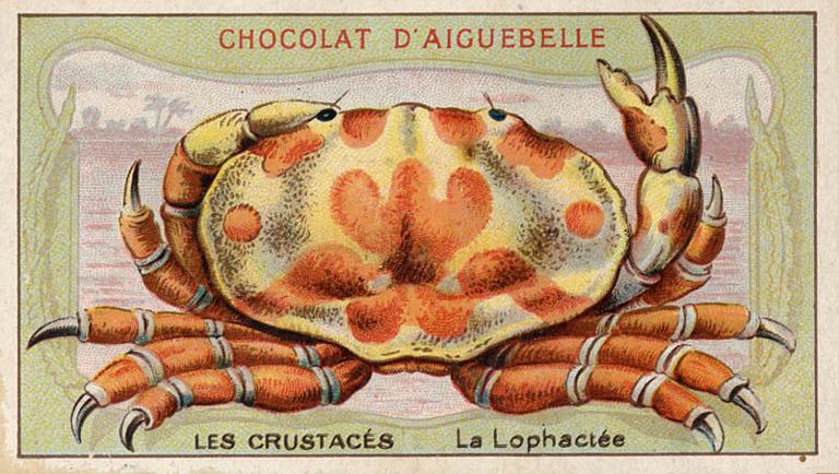 LES CRUSTACES / La Lophactée (titre inscrit)_0