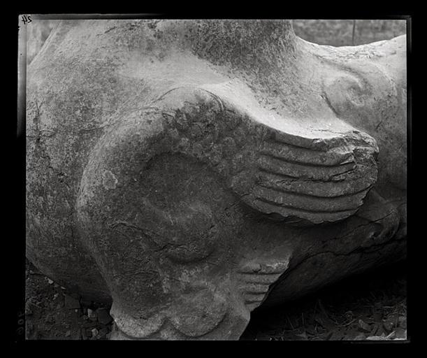[Jiangsu]. Région de Nankin [Nanjing], Ki-lin men [sic], allée funéraire de Song Wen-ti [Song Wendi] (mort en 453 ap. J.-C.), chimère, aile gauche, détail