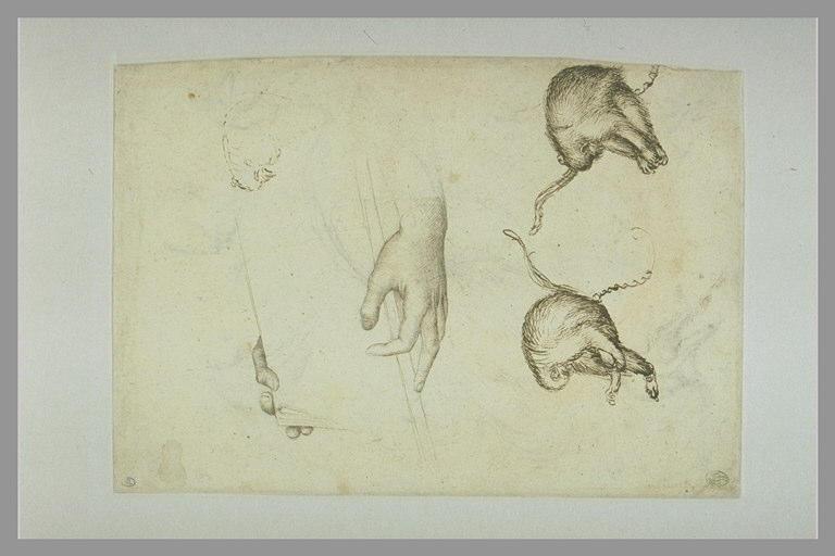 PISANELLO Antonio : Deux mains tenant un livre, deux singes enchaînés, et esquisses de singes