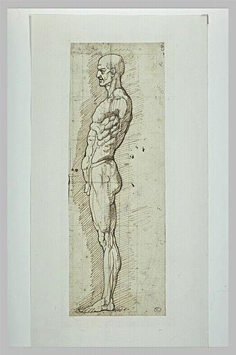 Etude anatomique d'un homme debout, de profil vers la gauche