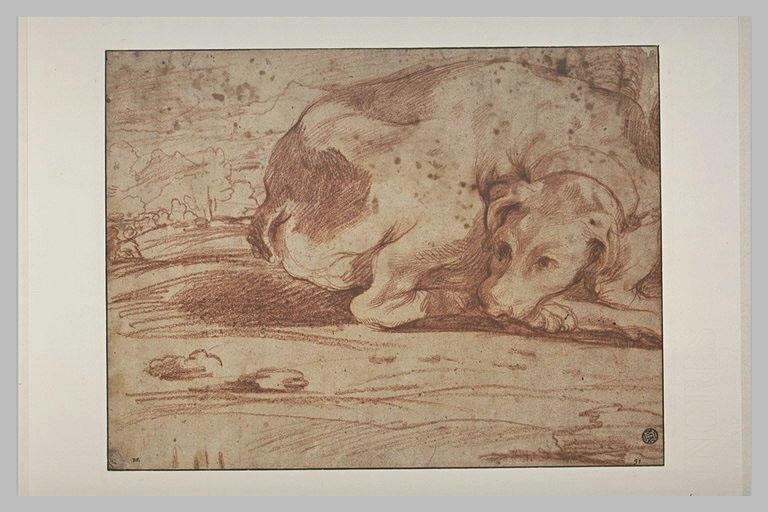 Un chien couché
