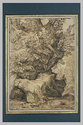 Etude de rochers et de broussailles