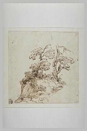 Un tronc et quelques arbustes sur un tertre