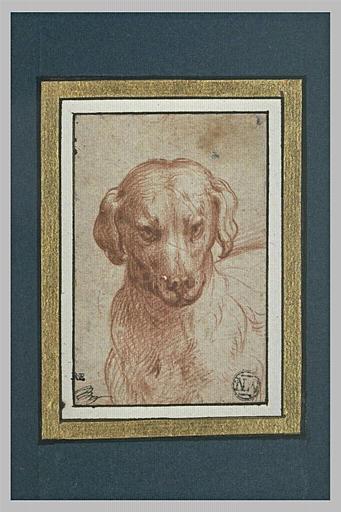 Tête d'un chien, les oreilles pendantes
