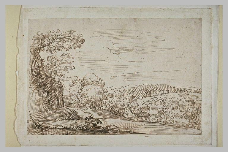 Paysage vallonné et boisé