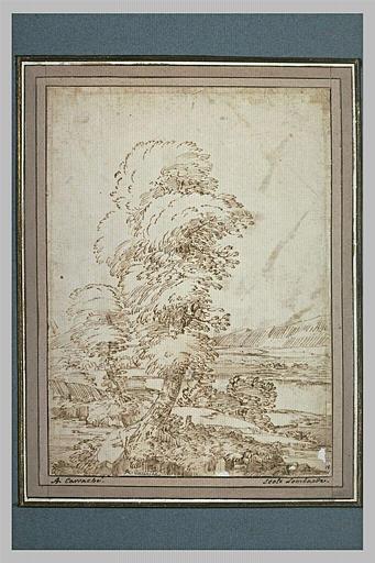 Un grand arbre, dans un paysage de plaine, avec des montagnes au loin