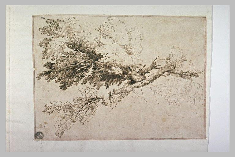 Frondaisons de deux arbres aux troncs s'entremêlant_0
