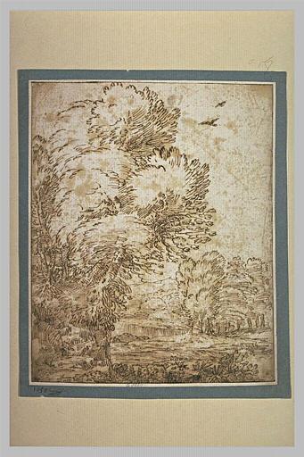 Cascade en bordure d'un bois