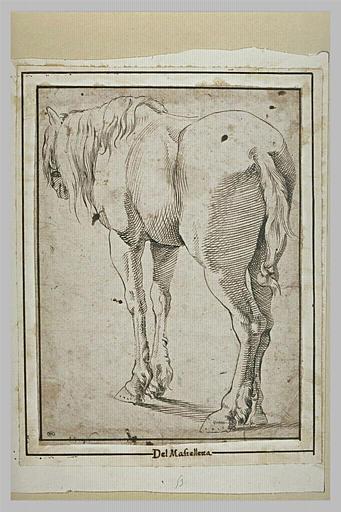 Un cheval debout, tourné à gauche
