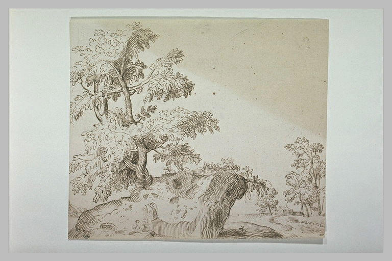 Un arbre sur un rocher, dans un paysage_0