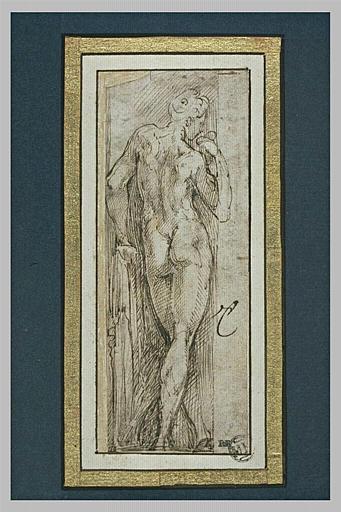 Homme nu debout, de dos, étude pour l'Adam de la Steccata