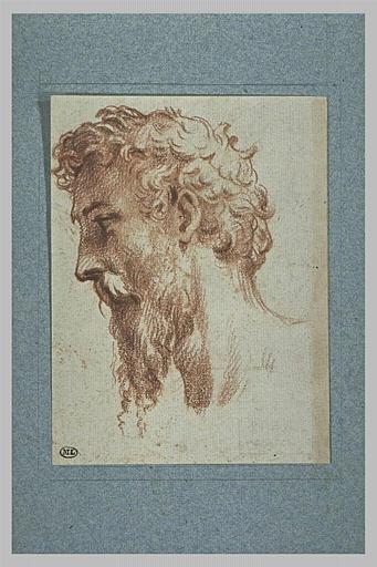 Tête d'homme barbu, de profil vers la gauche