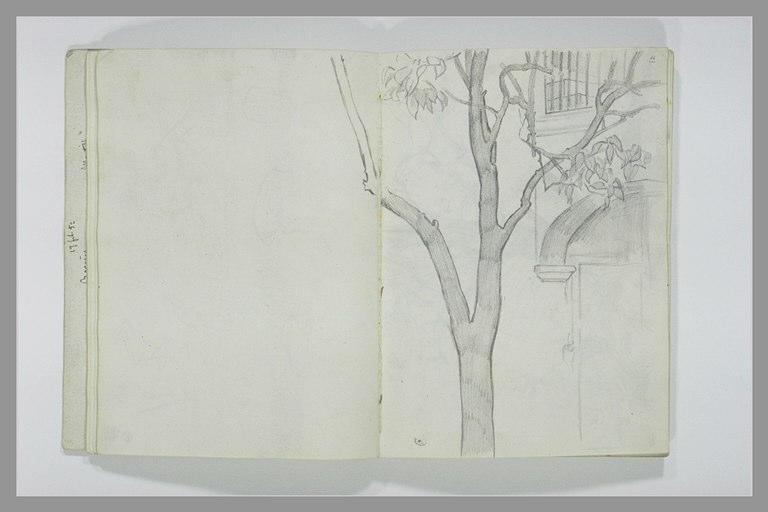 DEHODENCQ Alfred : Branche d'arbre