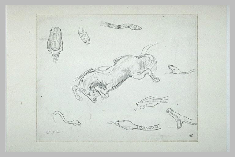 Cheval précipité dans le vide, et huit études de têtes de serpent_0