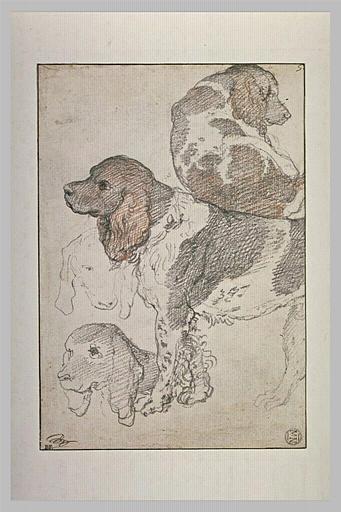 Etude de deux chiens, l'un debout, l'autre couché, et deux têtes de chien