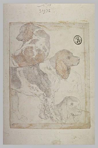 Quatre études de chiens