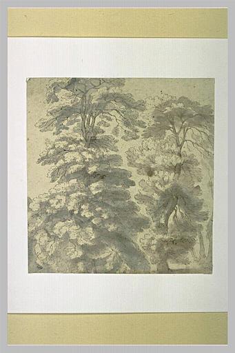 Etude de deux arbres touffus_0