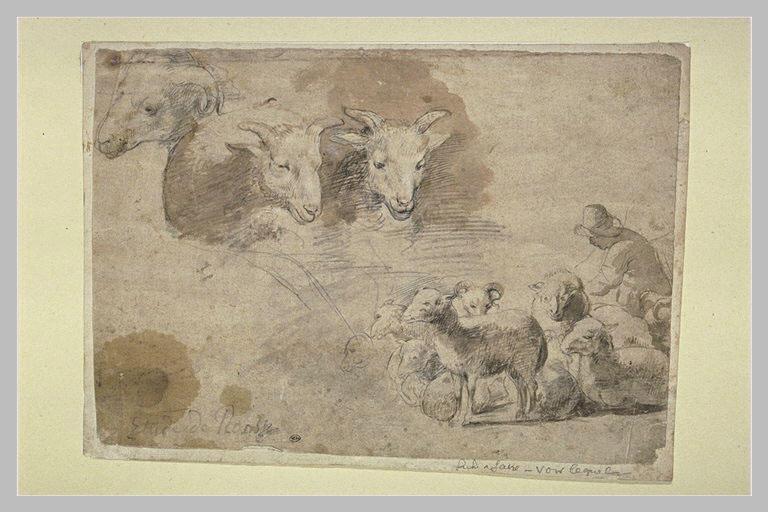 Etudes de moutons et troupeau avec berger