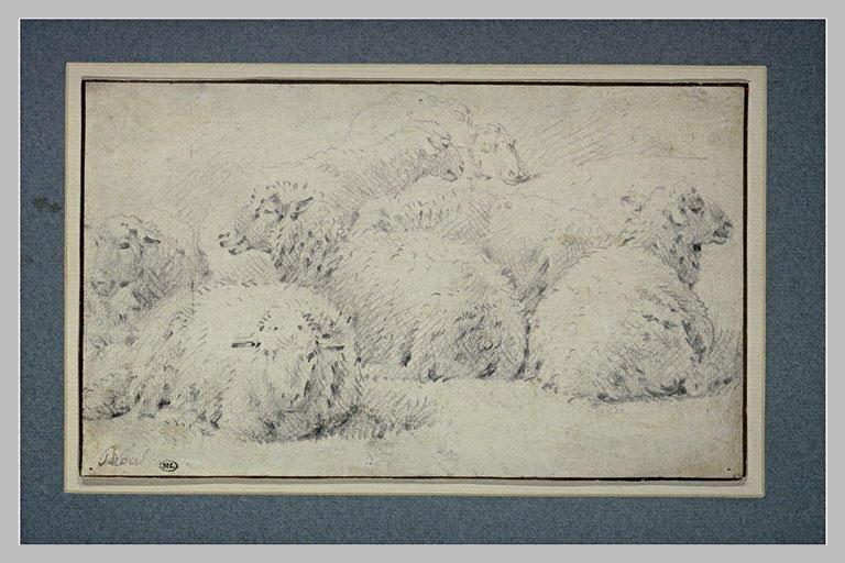 Etude de sept moutons couchés