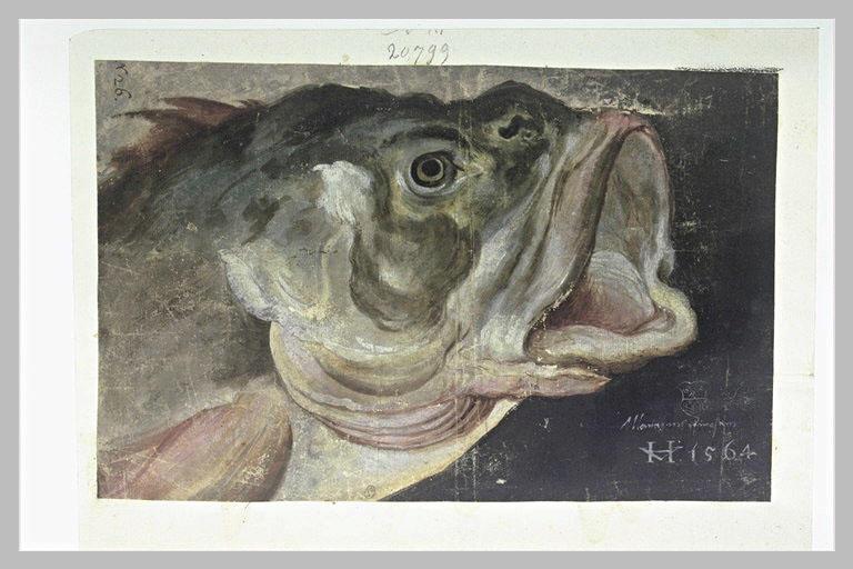 Tête de poisson, tournée vers la droite, la bouche ouverte