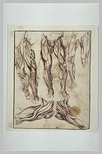 Etudes de jambes d'écorchés