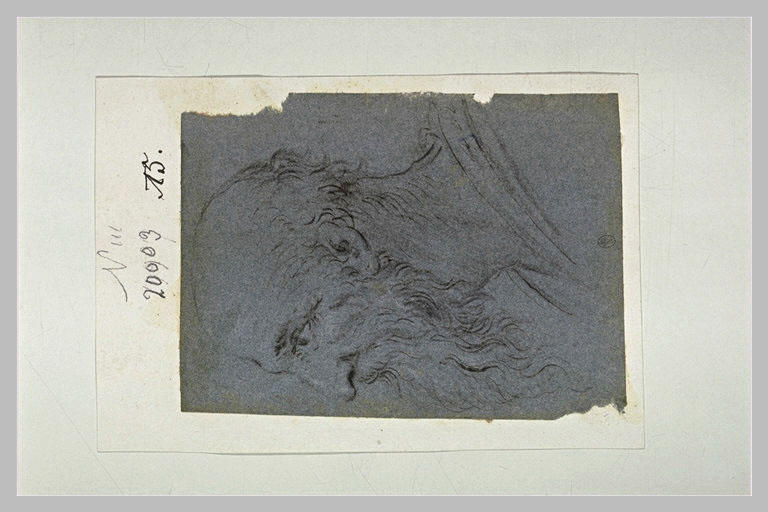 Tête de vieil homme chauve, barbu, de profil à gauche