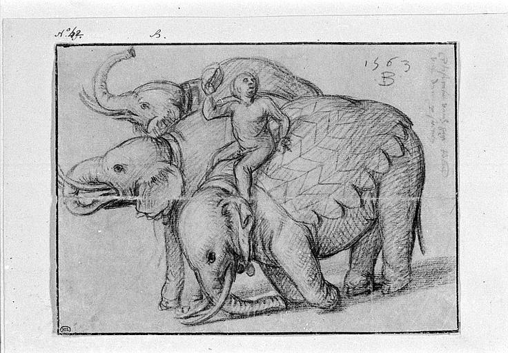 Trois éléphants tournés vers la gauche et leur cornac