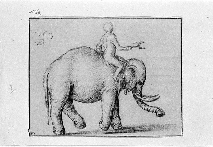 Eléphant marchant vers la droite, monté par un homme_0
