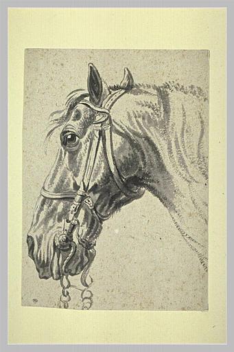 Tête de cheval bridé, de profil vers la gauche