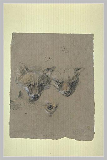 Deux têtes de renards et un oeil_0