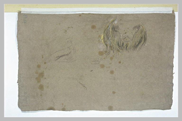 Etude d'une tête de lion