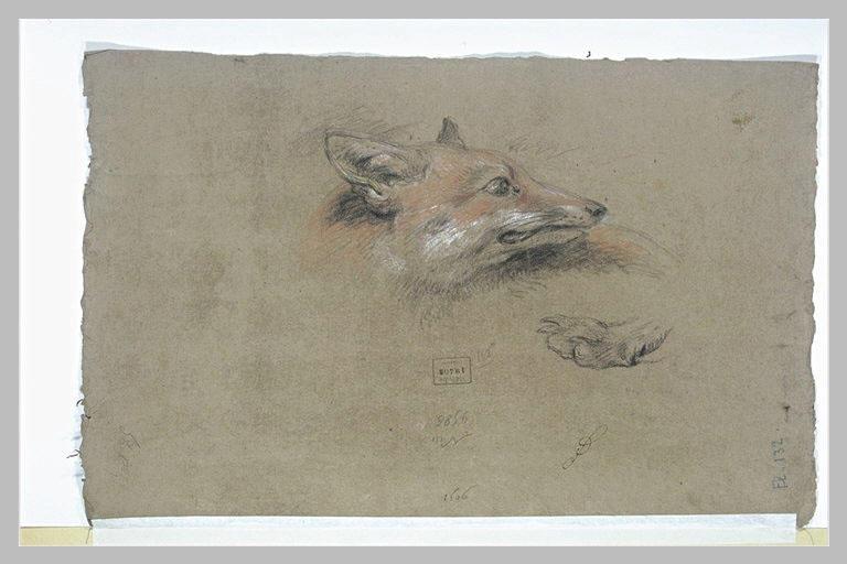Tête de renard et une patte_0