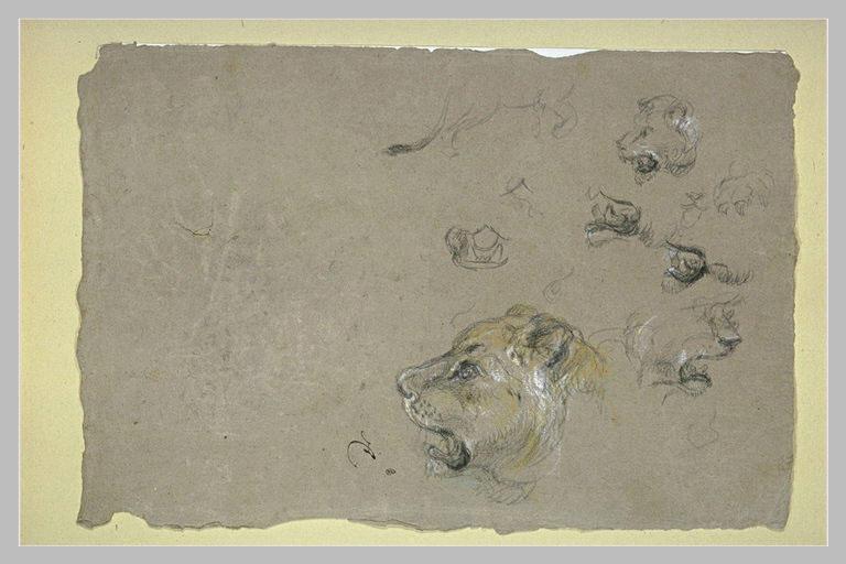 Tête de lion, et études du corps et de la mâchoire