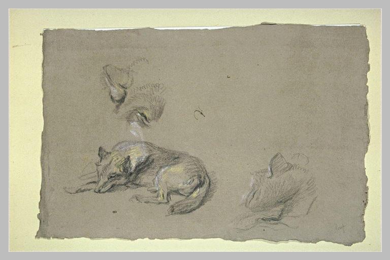 Loup couché et deux têtes