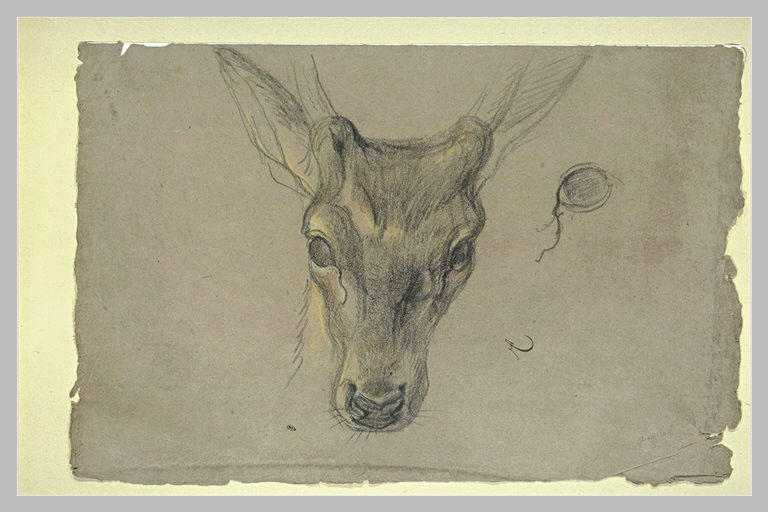 Etude d'une antilope_0