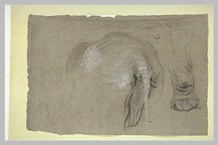 Etudes d'un éléphant, pied et corps vu de dos