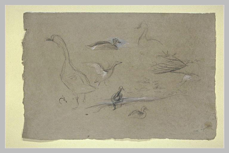 Etude d'oies et de canards
