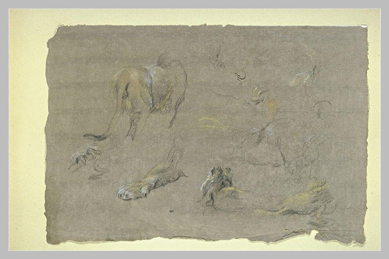 Etude de lions, de pattes et de griffes