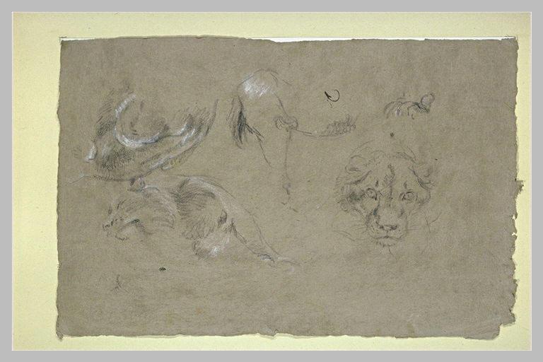 Une tête de lion et autres études du corps du même animal