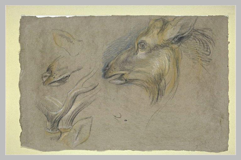 Une tête de chevreuil et des bois
