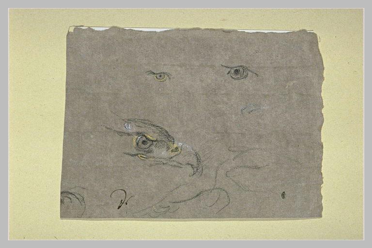 Etude d'une tête d'oiseau de proie et de deux yeux