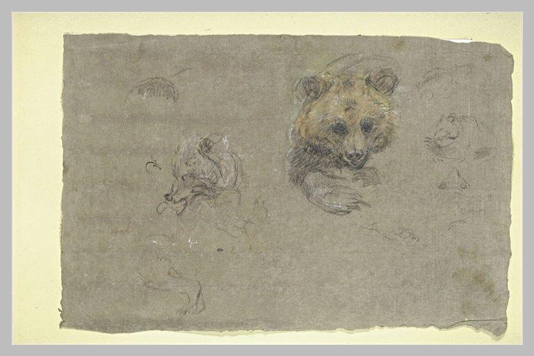 Etudes d'ours