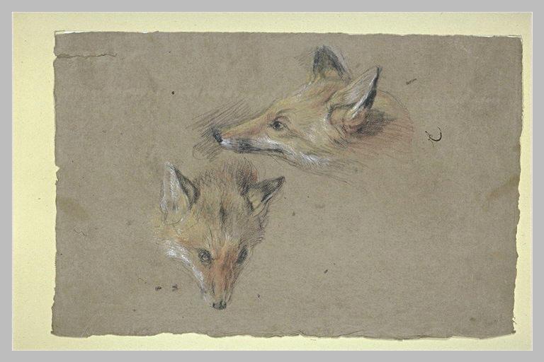 Etude de deux têtes de renards_0