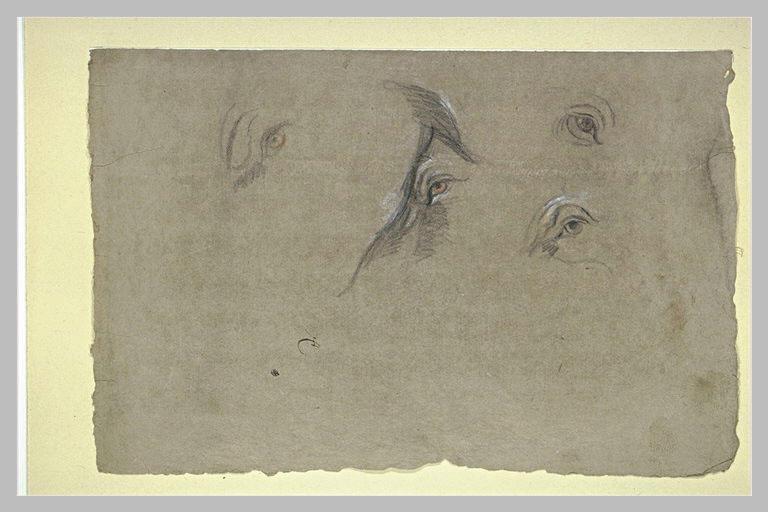 Etude de quatre yeux d'animaux_0