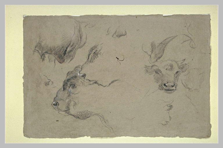 Etude de têtes de bisons_0