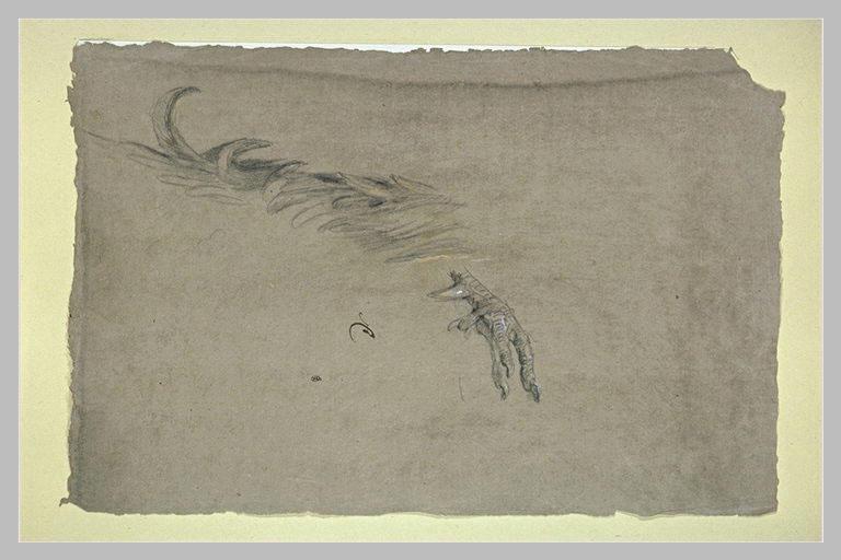 Etude d'une aile et d'une patte d'oiseau