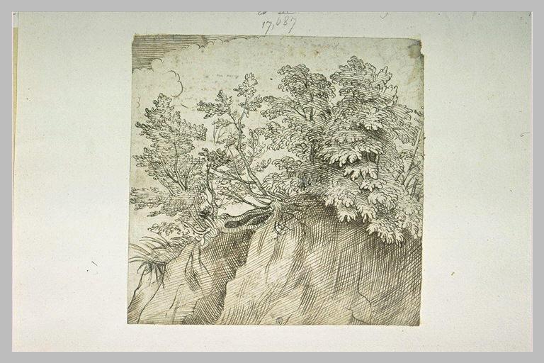 Haut d'un talus couronné d'arbustes