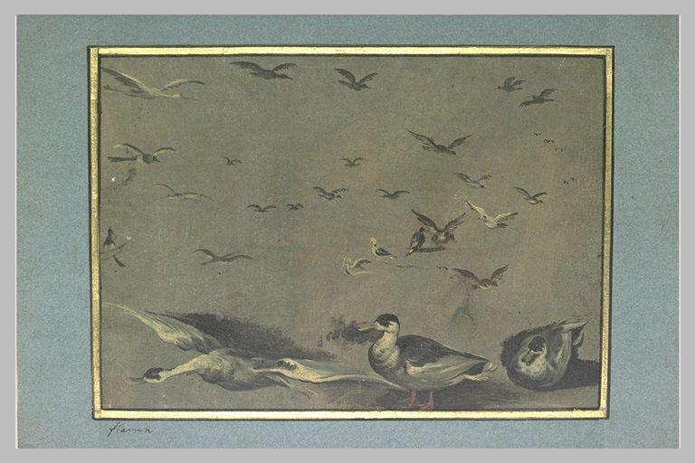 Etudes d'oiseaux_0