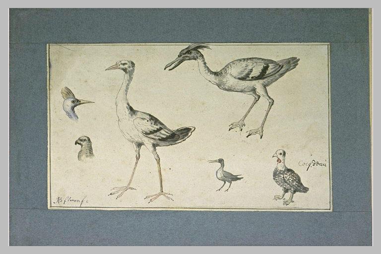 Quatre oiseaux et deux têtes d'oiseaux
