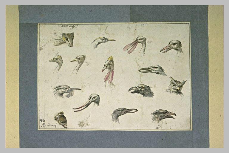 Etude de quinze têtes d'oiseaux divers_0